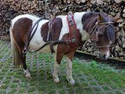 Pony Kutschgeschirr zweispannig