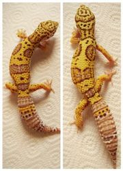 Leopardgecko 1.1