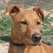 SCOOBY - fröhlicher Junghund