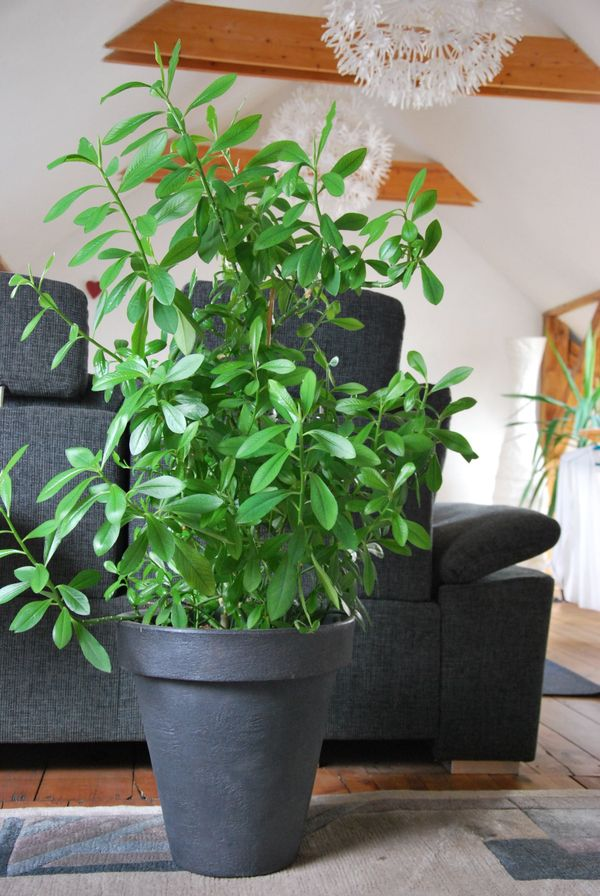 pflanzen als raumteiler simple with pflanzen als. Black Bedroom Furniture Sets. Home Design Ideas