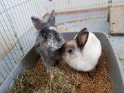 Kaninchenpaar in gute Hände abzugeben