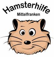 4 zwerg hamster aus pflegestelle