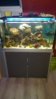 Komplett 160l Meerwasseraquarium