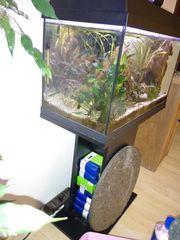 Verkaufe Aquarium komplett mit Fischen