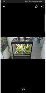 Terrarium mit Pauenauge Taggeckos