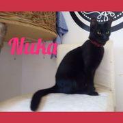 Katzenkinder Nuka und