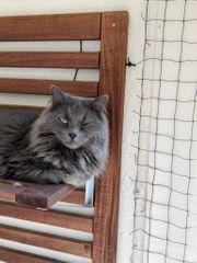 Schweren Herzens Katze abzugeben Kater