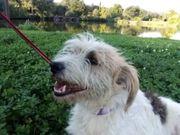 Roshka- absoluter Familienhund - liebt Kinder-