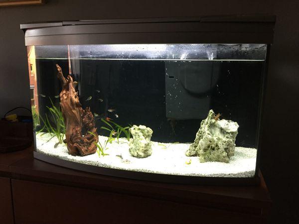 ❤ aquarium rahmen Kleinanzeigen (Aquaristik) kaufen & verkaufen bei ...