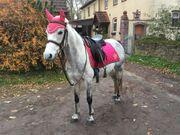 Reitbeteiligung an Pony