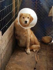 Notfellchen Marley - Handicaphund