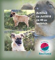Achilles - lächelnder Hundemann